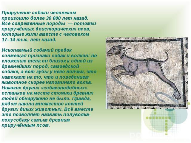 Приручение собаки человеком произошло более 30 000 лет назад. Все современные породы — потомки приручённых доисторических псов, которые жили вместе с человеком 17–14 тыс. лет назад. Ископаемый собачий предок совмещал признаки собак и волков: по слож…