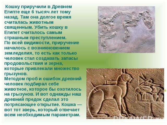 Кошку приручили в Древнем Египте еще 6 тысяч лет тому назад. Там она долгое время считалась животным священным. Убить кошку в Египет считалось самым страшным преступлением. По всей видимости, приручение началось с возникновением земледелия, то есть …