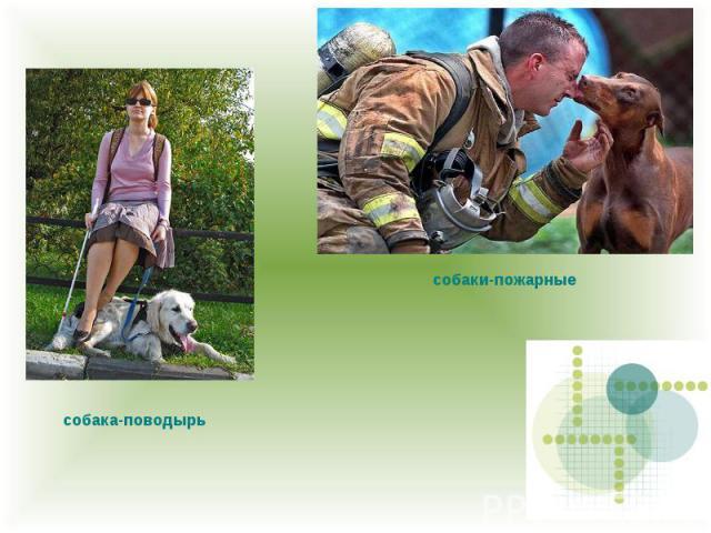 собаки-пожарные собака-поводырь
