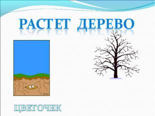 РАСТЕТ ДЕРЕВО ЦВЕТОЧЕК