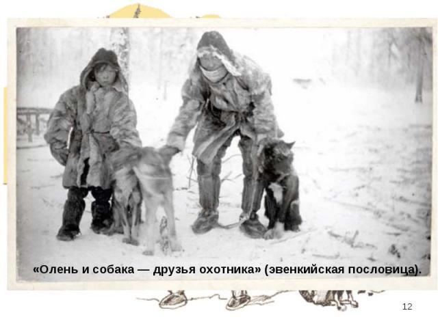 «Олень и собака — друзья охотника» (эвенкийская пословица).