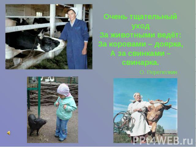 Очень тщательный уход За животными ведёт: За коровами – доярка, А за свинками – свинарка. О. Перепелкин