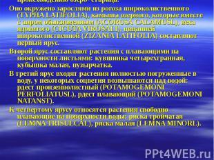 Геоботаническое описание №1 (Исследуемого участка озера Сластино.). Дата: 26.06.