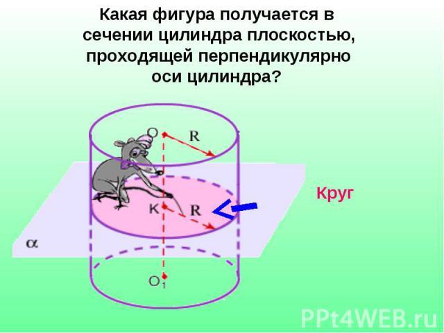 Какая фигура получается в сечении цилиндра плоскостью, проходящей перпендикулярно оси цилиндра?