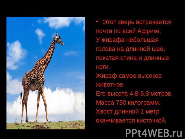 Этот зверь встречается почти по всей Африке. У жирафа небольшая голова на длинной шее, покатая спина и длинные ноги. Жираф самое высокое животное. Его высота 4,8-5,8 метров. Масса 750 килограмм. Хвост длинной 1 метр оканчивается кисточкой.