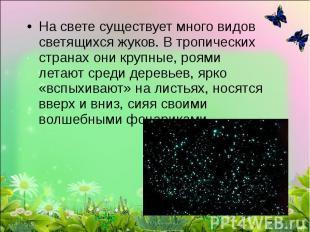 На свете существует много видов светящихся жуков. В тропических странах они круп