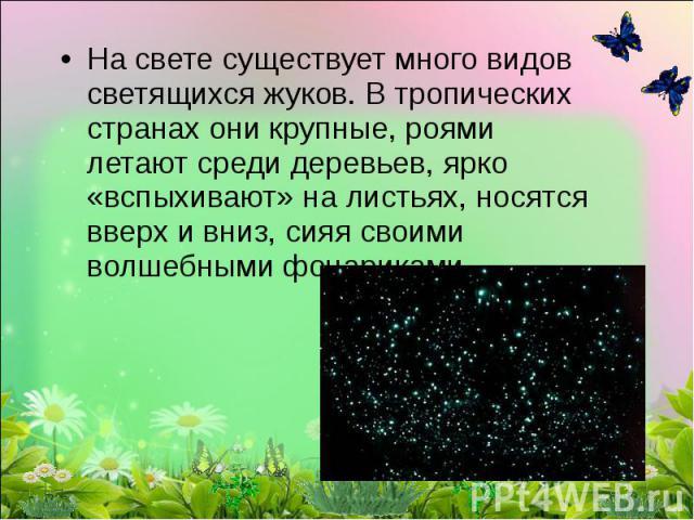 На свете существует много видов светящихся жуков. В тропических странах они крупные, роями летают среди деревьев, ярко «вспыхивают» на листьях, носятся вверх и вниз, сияя своими волшебными фонариками.