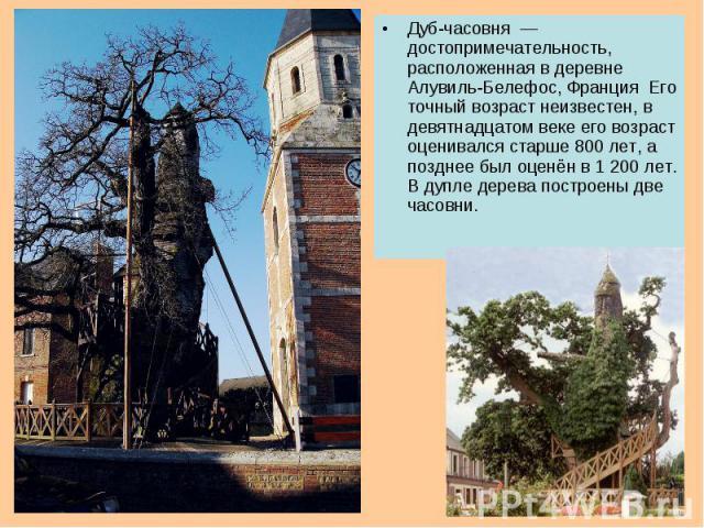 Дуб-часовня — достопримечательность, расположенная в деревне Алувиль-Белефос, Франция Его точный возраст неизвестен, в девятнадцатом веке его возраст оценивался старше 800 лет, а позднее был оценён в 1 200 лет. В дупле дерева построены две часовни.