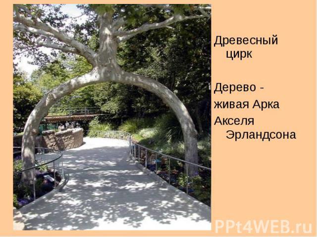 Древесный цирк Дерево - живая Арка Акселя Эрландсона