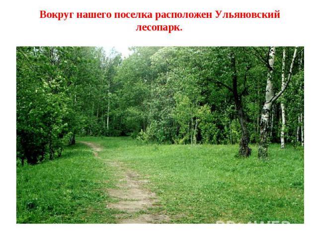 Вокруг нашего поселка расположен Ульяновский лесопарк.
