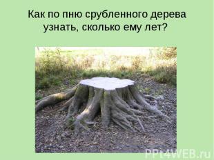 Как по пню срубленного дерева узнать, сколько ему лет?