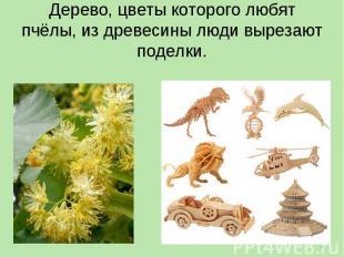 Дерево, цветы которого любят пчёлы, из древесины люди вырезают поделки.