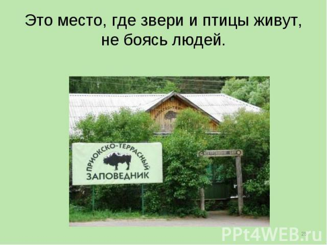 Это место, где звери и птицы живут, не боясь людей.