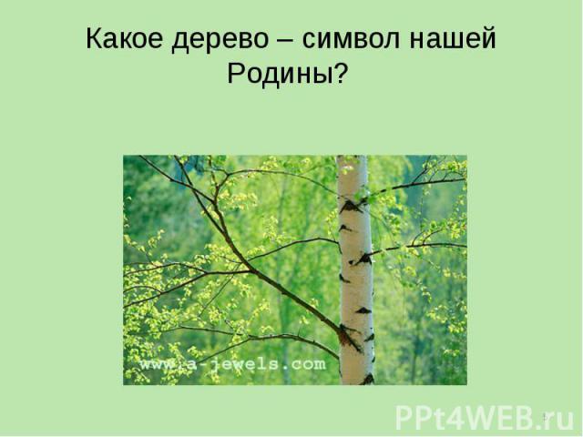 Какое дерево – символ нашей Родины?