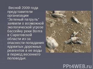 """Весной 2009 года представители организации """"Зеленый патруль"""" заявили о возможной"""