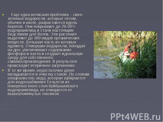 Еще одна волжская проблема – сине-зеленые водоросли, которые летом, обычно в июле, разрастаются вдоль берегов. Они покрывают до 20-30% водохранилищ и стали настоящим бедствием для Волги. Эти растения выделяют до 300 видов органических веществ, больш…