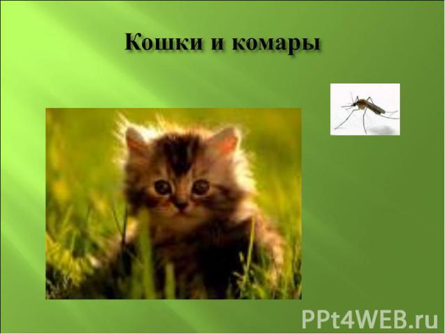 Кошки и комары
