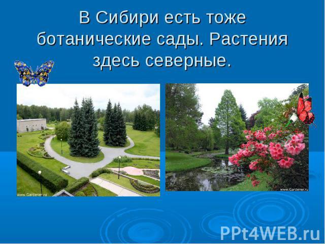 В Сибири есть тоже ботанические сады. Растения здесь северные.
