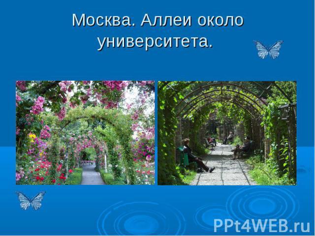 Москва. Аллеи около университета.