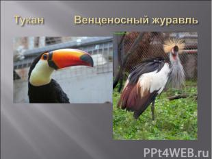 Тукан Венценосный журавль