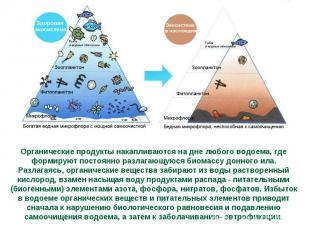 Органические продукты накапливаются на дне любого водоема, где формируют постоян