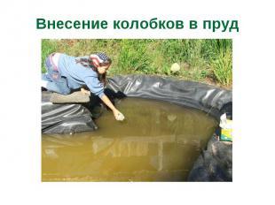 Внесение колобков в пруд