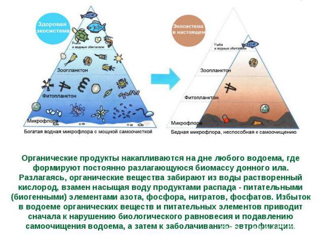 Органические продукты накапливаются на дне любого водоема, где формируют постоянно разлагающуюся биомассу донного ила. Разлагаясь, органические вещества забирают из воды растворенный кислород, взамен насыщая воду продуктами распада - питательными (б…