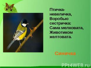 Птичка-невеличка, Воробью сестричка: Сама мелковата, Животиком желтовата. Синичк