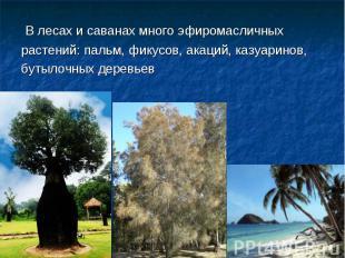 В лесах и саванах много эфиромасличных растений: пальм, фикусов, акаций, казуари