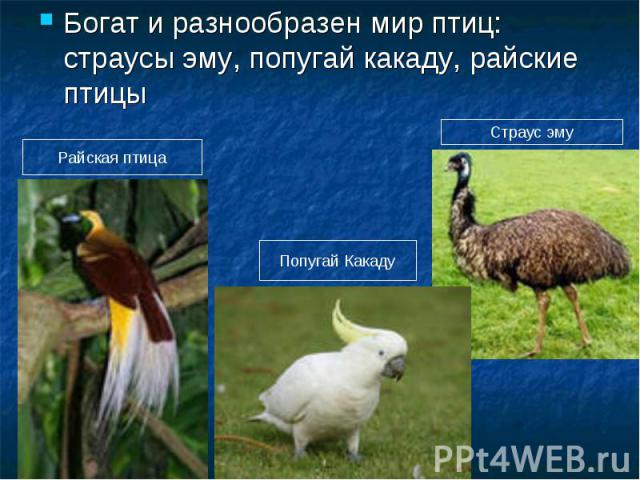 Богат и разнообразен мир птиц: страусы эму, попугай какаду, райские птицы Райская птица Попугай Какаду Страус эму