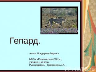 Гепард. Автор: Бондарева Марина МБОУ «Калининская СОШ» , ученица 4 класса Руково