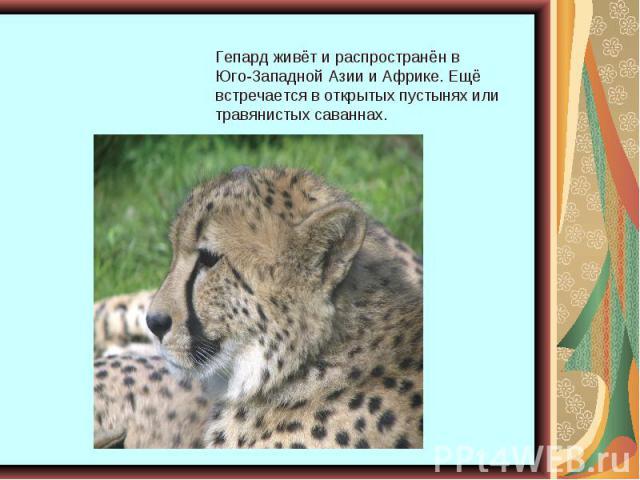 Гепард живёт и распространён в Юго-Западной Азии и Африке. Ещё встречается в открытых пустынях или травянистых саваннах.
