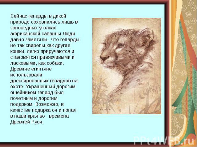 Сейчас гепарды в дикой природе сохранились лишь в заповедных уголках африканской саванны.Люди давно заметили, что гепарды не так свирепы,как другие кошки, легко приручаются и становятся привязчивыми и ласковыми, как собаки. Древние египтяне использо…