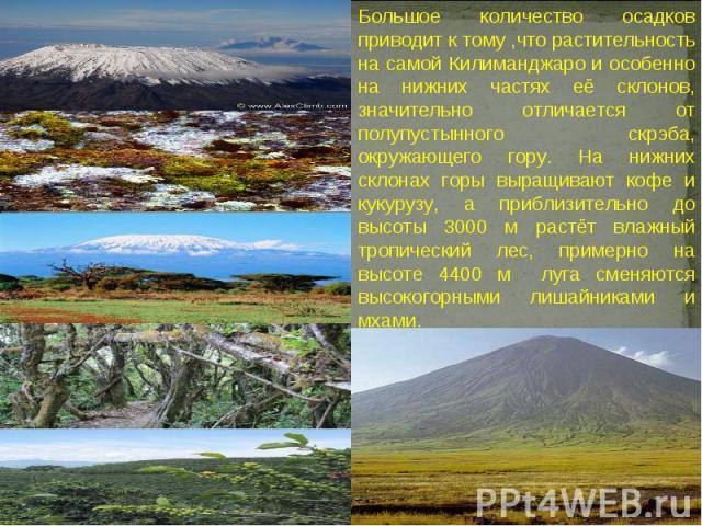 Большое количество осадков приводит к тому ,что растительность на самой Килиманджаро и особенно на нижних частях её склонов, значительно отличается от полупустынного скрэба, окружающего гору. На нижних склонах горы выращивают кофе и кукурузу, а приб…