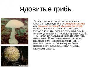 Ядовитые грибы Cамые опасные смертельно ядовитые грибы. Это, прежде всего: бледн