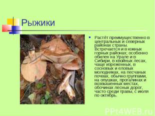 Рыжики Растёт преимущественно в центральных и северных районах страны. Встречает