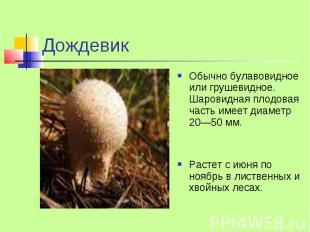 Дождевик Обычно булавовидное или грушевидное. Шаровидная плодовая часть имеет ди
