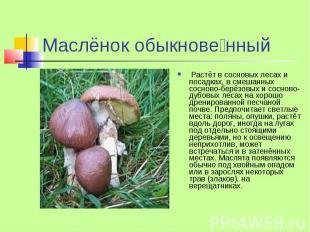 Маслёнок обыкнове нный Растёт в сосновых лесах и посадках, в смешанных сосново-б