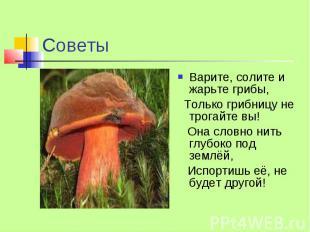 Советы Варите, солите и жарьте грибы, Только грибницу не трогайте вы! Она словно