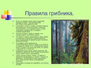 Правила грибника. В лес за грибами нужно идти в удобной одежде и обуви – прогулк