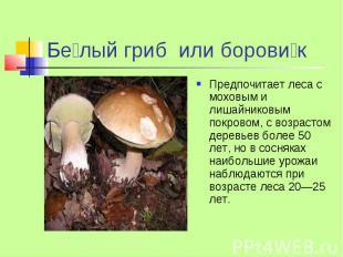 Бе лый гриб или борови к Предпочитает леса с моховым и лишайниковым покровом, с