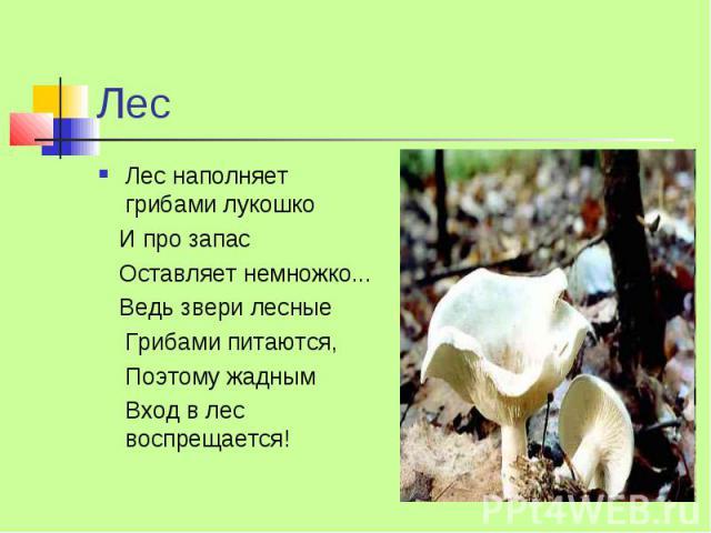Лес Лес наполняет грибами лукошко И про запас Оставляет немножко... Ведь звери лесные Грибами питаются, Поэтому жадным Вход в лес воспрещается!