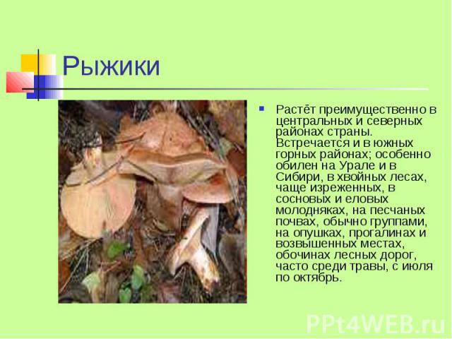 Рыжики Растёт преимущественно в центральных и северных районах страны. Встречается и в южных горных районах; особенно обилен на Урале и в Сибири, в хвойных лесах, чаще изреженных, в сосновых и еловых молодняках, на песчаных почвах, обычно группами, …