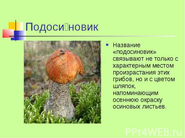Подоси новик Название «подосиновик» связывают не только с характерным местом произрастания этих грибов, но и с цветом шляпок, напоминающим осеннюю окраску осиновых листьев.