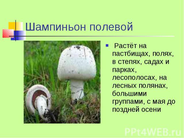 Шампиньон полевой Растёт на пастбищах, полях, в степях, садах и парках, лесополосах, на лесных полянах, большими группами, с мая до поздней осени