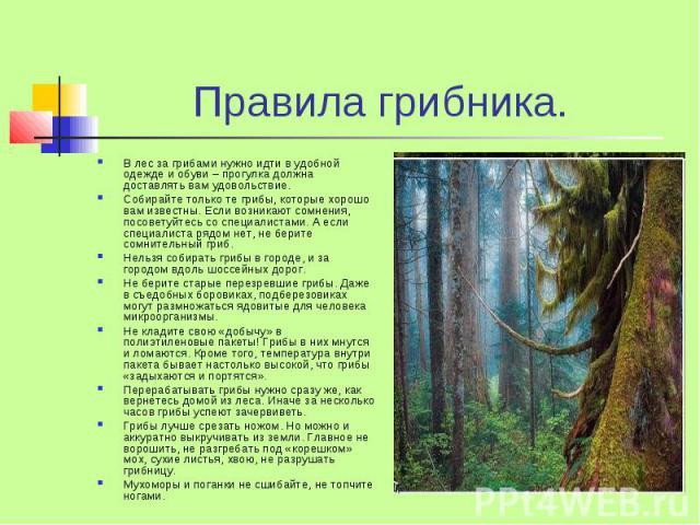 Правила грибника. В лес за грибами нужно идти в удобной одежде и обуви – прогулка должна доставлять вам удовольствие. Собирайте только те грибы, которые хорошо вам известны. Если возникают сомнения, посоветуйтесь со специалистами. А если специалиста…