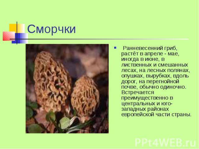 Сморчки Ранневесенний гриб, растёт в апреле - мае, иногда в июне, в лиственных и смешанных лесах, на лесных полянах, опушках, вырубках, вдоль дорог, на перегнойной почве, обычно одиночно. Встречается преимущественно в центральных и юго-западных райо…