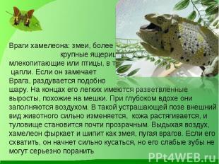 Враги хамелеона: змеи, более крупные ящерицы, хищные млекопитающие или птицы, в