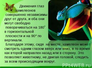 Движения глаз хамелеонов совершенно независимы друг от друга, и оба они могут св