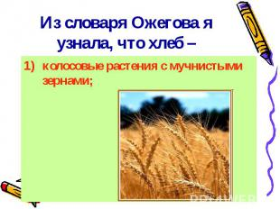 Из словаря Ожегова я узнала, что хлеб – колосовые растения с мучнистыми зернами;